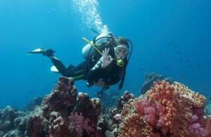 Pulau Payar Marine Park diving