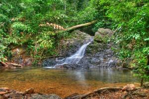 Gunung Arong Recreational Forest