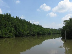 Matang Mangrove Forest Reserve River