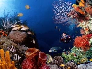 Rawa Island scuba diving