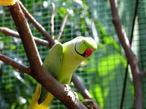Negeri Sembilan Mini Bird Park
