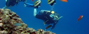 Bunga Raya Island Resort & Spa diving