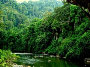 Danum Valley Conservation Area river