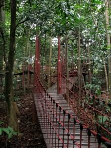 The Bukit Nanas Forest Reserve