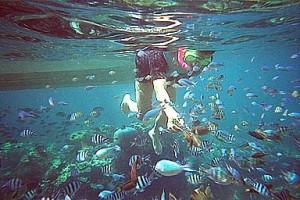 Tulai Island snorkeling