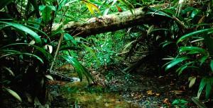 Ulu Serting Recreational Park rainforest