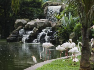 The KL Bird Park