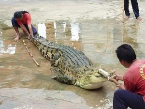 Sandakan Crocodile Farm