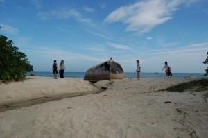 Penang National Park teluk duyung