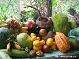 Penang Tropical Fruit Farm fruits