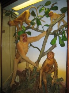 Sarawak Museum display