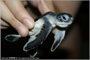 Cherating Turtle Sanctuary