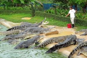 Melaka Crocodile Farm crocodiles
