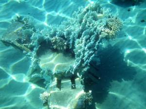 Tioman Marine Park corals