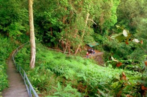 Soga Perdana Recreational Forest