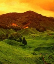cameron highlands - Copy