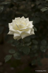 Cameron Highlands Rose Center