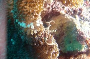 Diving in pom pom island