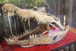 Jong Crocodile Farm