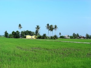 Kedah natural scene