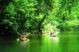 Langkawi Mangrove Kayak Tour