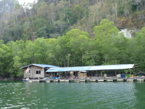Langkawi mangrove tour fish breeding farm