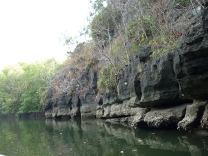 Langkawi mangrove tour crocodile cave