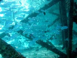 Mataking house reef diving