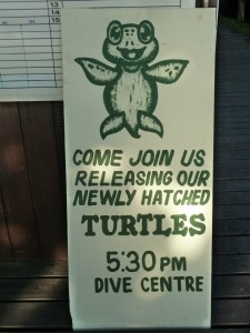 Turtle release banner