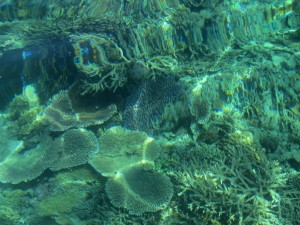 Underwater in Pulau Sibuan