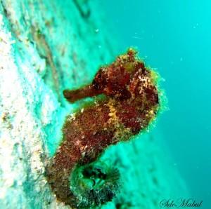 SDC Diving Trip