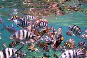 Snorkeling in Perhentian