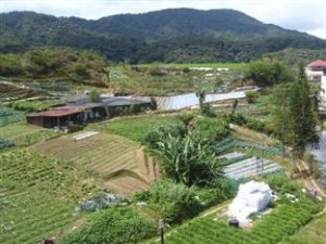 Surroundign View 1