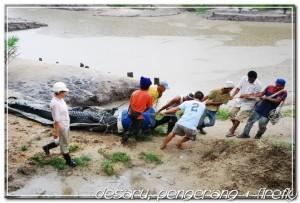 crocodile world