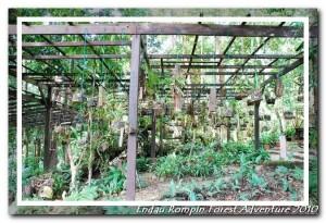 endau rompin national park orchid garden