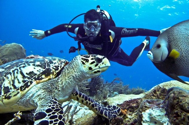 Pulau Gaya diving tour