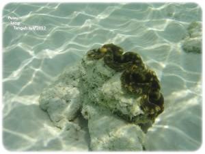 2nd Snorkeling 2