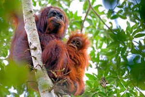 Rasa Ria Orang Utan Encounter Tour