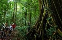 Danum Valley Conservation Area , Lahad Datu