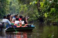 Kinabatangan River , Sandakan