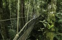 Mount Tapis Park