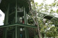 Rainforest Discovery Centre (RDC) , Sandakan