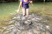 'Tagal' Sungai Moroli, Kampung Luanti - Fish Massage , Ranau