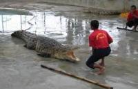 Tuaran Crocodile Farm , Tuaran
