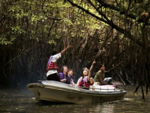 langkawi mangrove boat tour