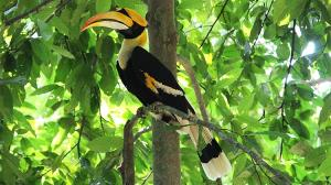 bird watching in langkawi