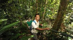 jungle-trekking in langkawi