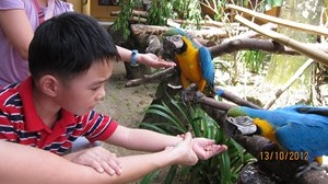 langkawi-bird-and-wildlife-park