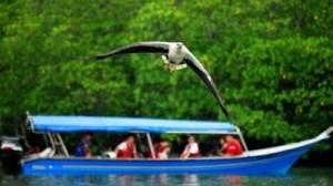 langkawi-island-hopping