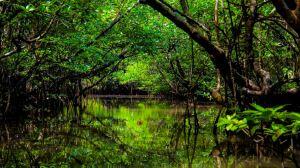 mangrove-forest langkawi